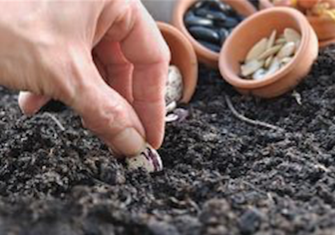 tips for growing seeds, planting seeds, seed germination