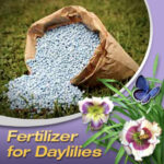 Australian fertiliser for daylilies
