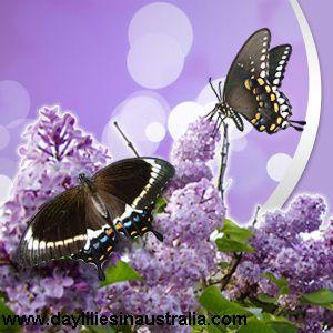 Butterfly Garden, Encourage Butterflies To Your Garden, Butterfly Plants