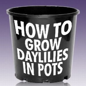 Growing Daylilies in Pots