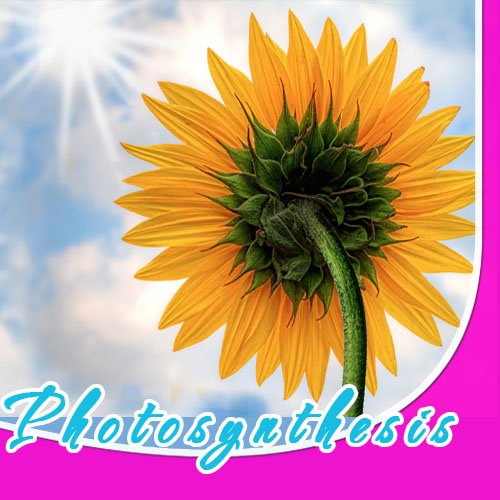 Understanding the process of Photosythesis