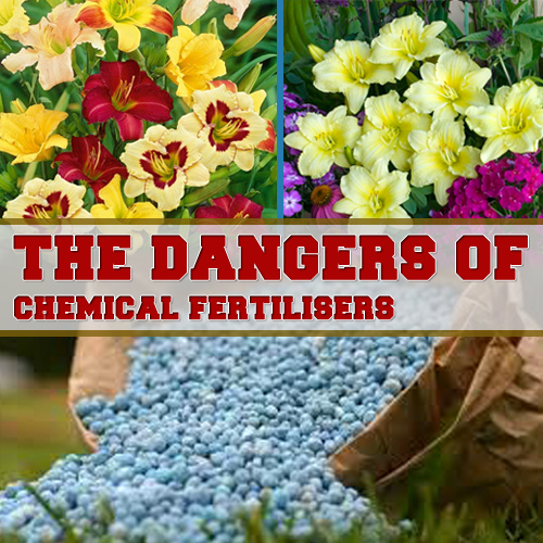 the dangers of chemical fertilisers