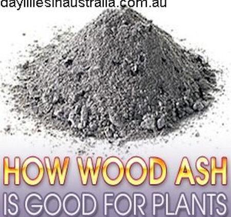 WoodAsh in a pile ready to siv through a colander