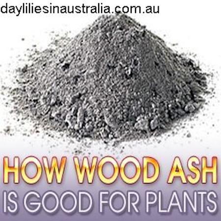 WoodAsh