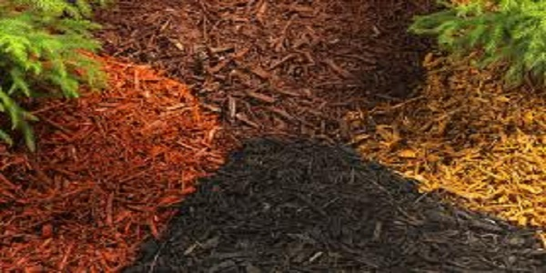 best mulches for gardening