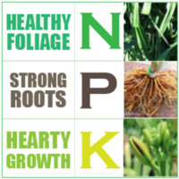 NPK Dose for Daylilies Fertilisers Nitrogen Phosphorus Potassium