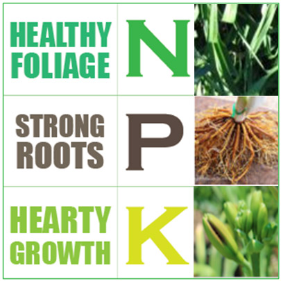Daylilies NPK Dose Daylilies Fertilisers Ensure Daylilies Grow Healthy Nitrogen Phosphorus Potassium