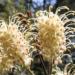 Plant Cultivars versus Varieties
