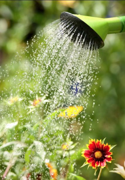 Foliar Feeding Plants and Daylilies