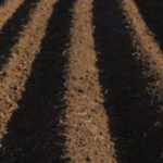 gardening with soil in australia