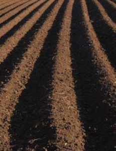 Soil in Australia and Its Organisms of the Earth
