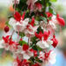 Fuchsia Plant Facts from Seed to Flowering