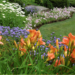 Low Maintenance Easy Care Perennials