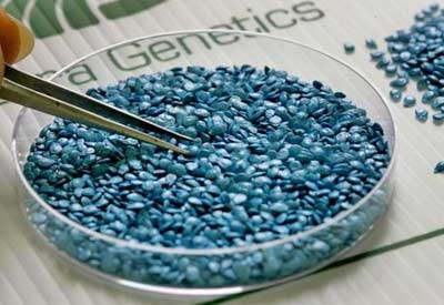 GMO Seeds Or Genetically Modified Seeds, GMO's What are They?