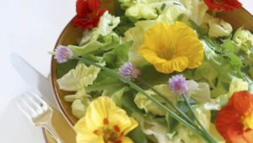 Nasturtiums are edible decorating a plate of food