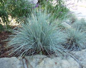 Silver Grey Foliage Plants Gardening