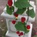 Trailing Abutilon Plant