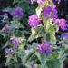 Variegated Plants Variegation Problems