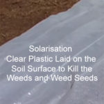 How to Sterilise Soil