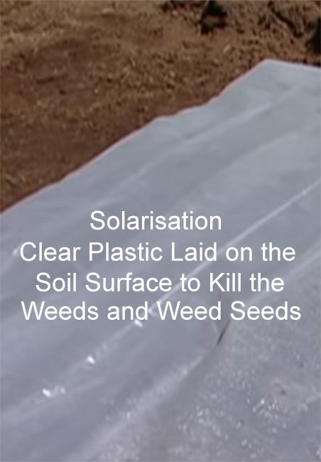 Sterilise Soil, soil sterilisation using steam kitchen oven microwave solarisation