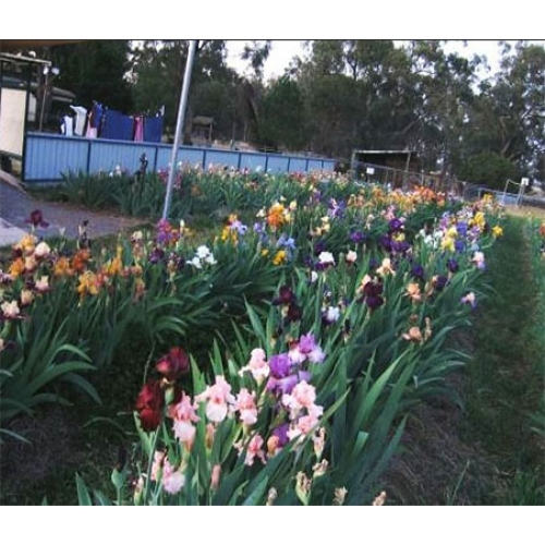 10 Different Coloured Irises $50
