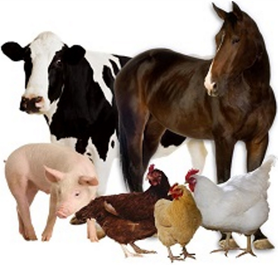 Most common organic fertilsers manures for organic gardening are from cows horses pigs and chooks
