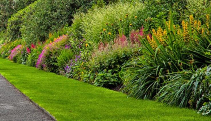 Ornamental-gardens-plants1