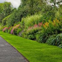 Ornamental gardens plants