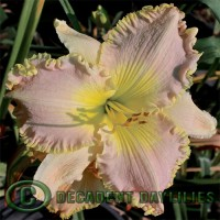 Pink Daylilies for Sale