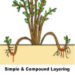 Layering Plants Simple Easy Methods