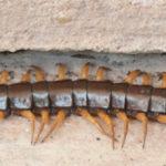 Centipedes Sun Sand Shade