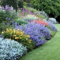 Photo of Herbaceous Perennials in the Garden