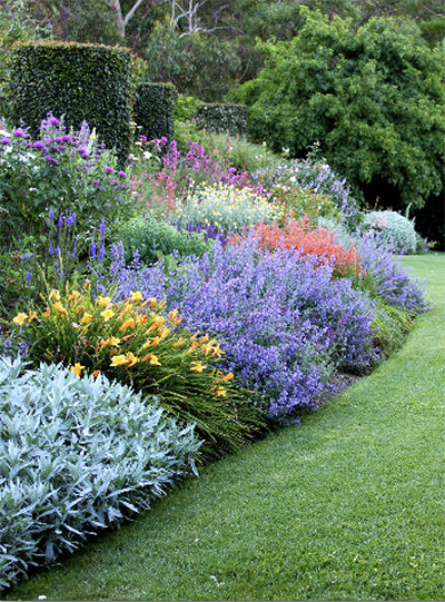 Photo of Herbaceous Perennial Plants in the Garden