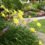 What Are Perennial Plants