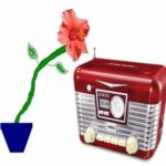 Does Music Affect Plant Growth