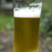 Is Beer A Good Garden Fertiliser