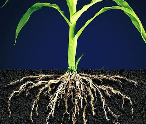 Liquid-Plant-Tonics-vs-Granular-Soil-Fertiliser