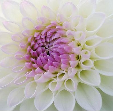 side-flower
