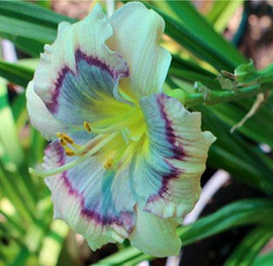 side-flower1