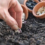 7-great-tips-on-gowing-seeds