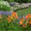 Are daylilies low maintenance easy care perennials