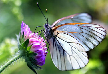 Attracting-and-benefiting-from-our-most-beautiful-pollinators.
