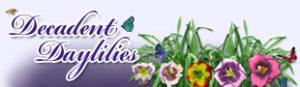 Decadent Daylilies