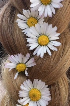 Daisy Daisies flowers plait in ladies hair