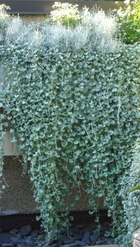 Low Maintenance Plants Outdoor Planters