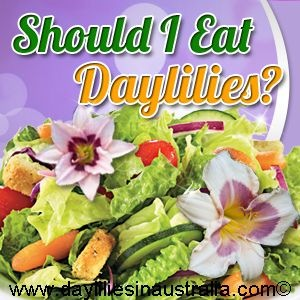 Edible daylilies in a salad