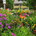 English-Cottage-Gardens-Perennials-Bulbs-Shrubs