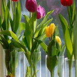 Forcing Spring flowering bulbs Indoors in a vase