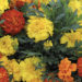 Marigolds In The World Care