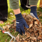 Picking up leaves in the garden